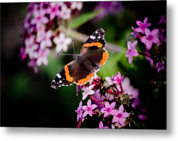 Butterfly On Penta Metal Print