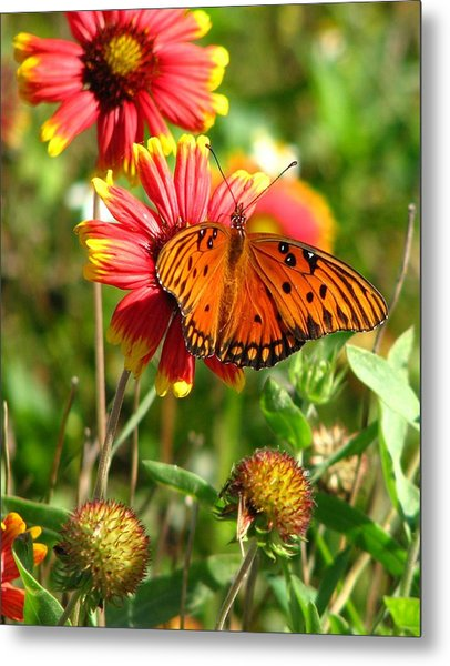 Butterfly One Metal Print by Peggy Burley