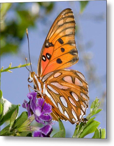 Butterfly Metal Print by Paulette Moran Dalton