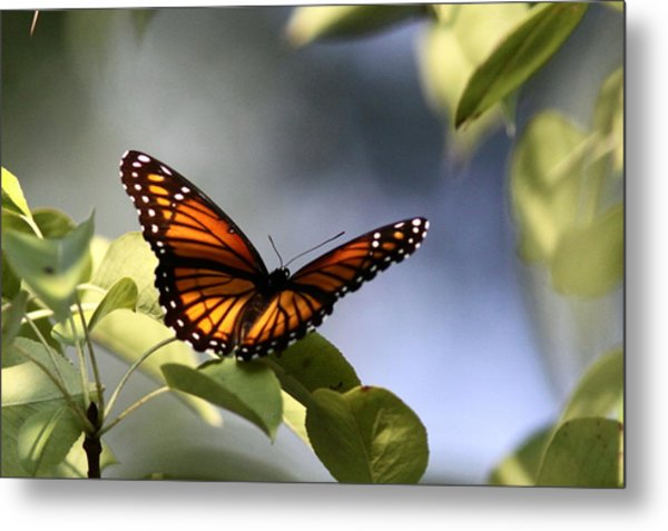 Butterfly -  Soaking Up The Sun Metal Print