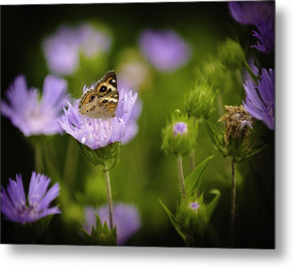 Butterfly Spotlight Metal Print