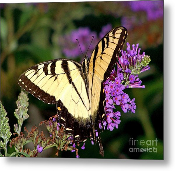 Butterfly Metal Print by Timothy Clinch