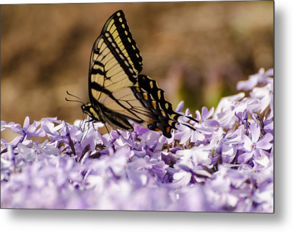 Butterfy On Flowers Metal Print