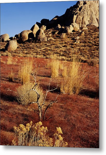 Buttermilks - Red Brush Metal Print