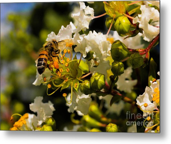 Buzzing Around Metal Print