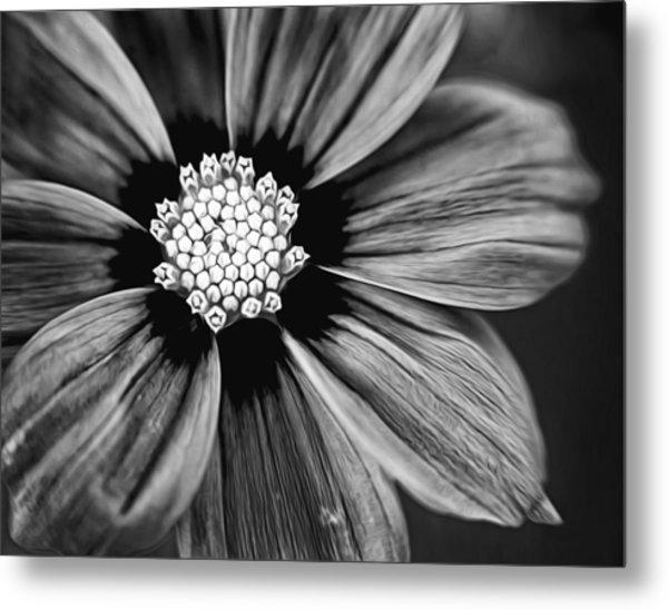 Bw Flower Art Metal Print by Tammy Smith