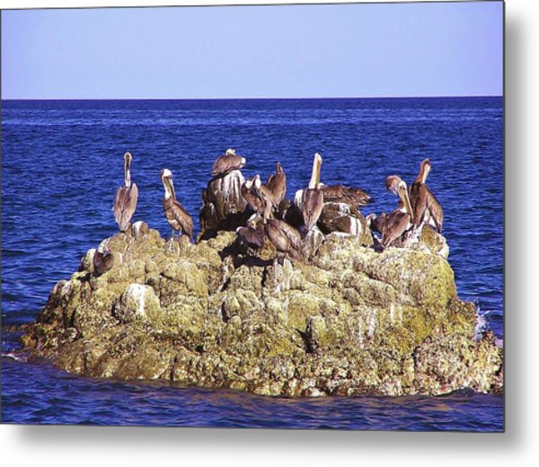 Cabo Pelicans Metal Print