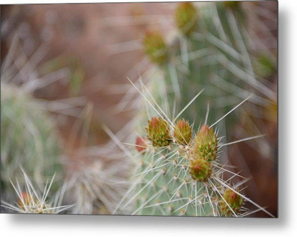 Cacti In Moab Metal Print by Kyle Reynolds