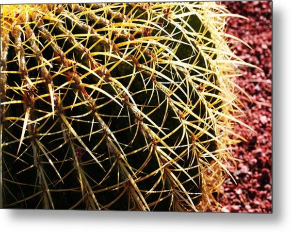 Cactus 10 Metal Print