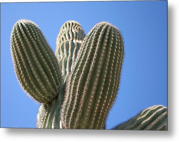 Cactus 16 Metal Print