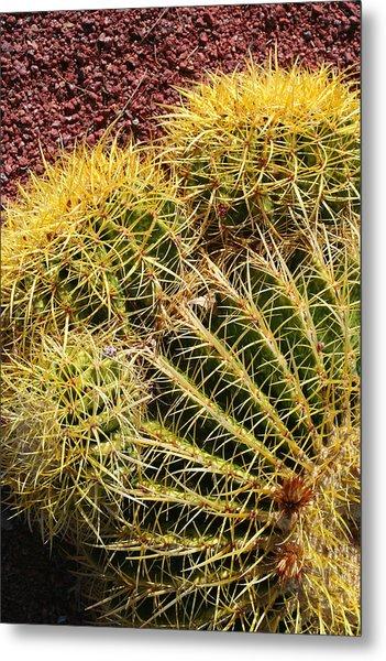 Cactus 9 Metal Print