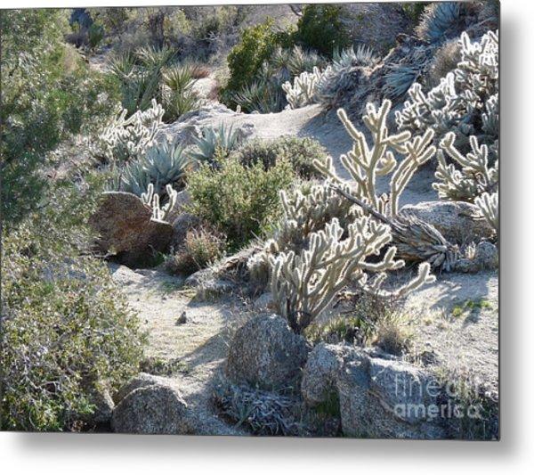 Cactus And Rocks Metal Print by Deborah Smolinske