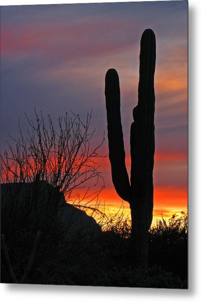 Cactus At Sunset Metal Print