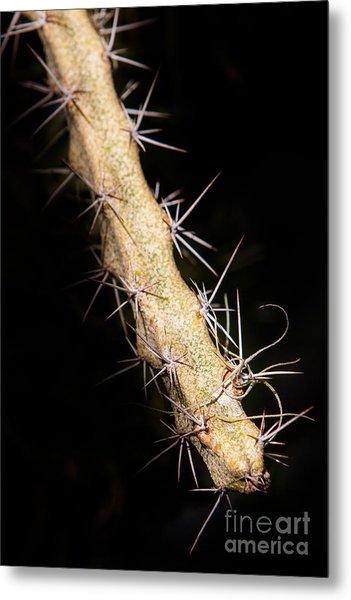 Cactus Branch Metal Print