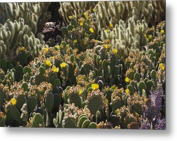 Cactus Carpet Metal Print