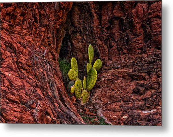 Cactus Dwelling Metal Print