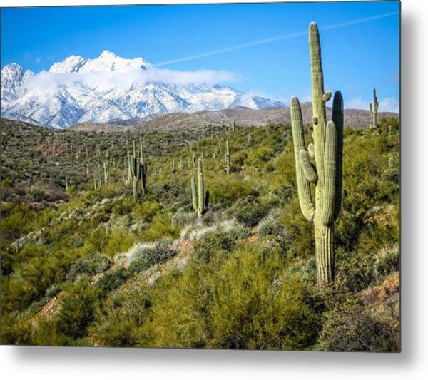 Cactus In Arizona Metal Print