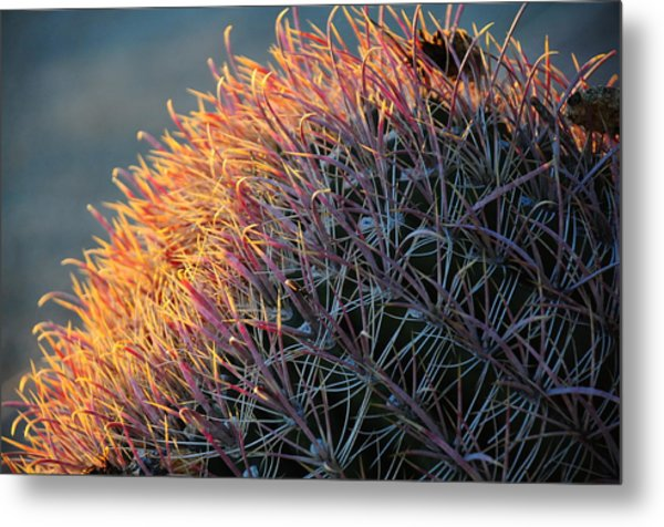 Metal Print featuring the photograph Cactus Rose by Susie Rieple
