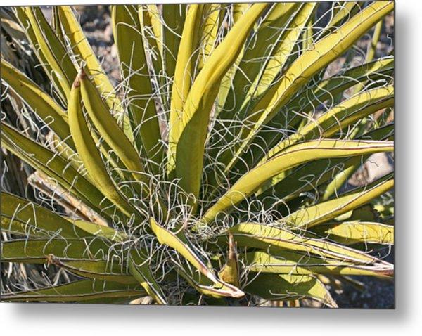 Cactus15 Metal Print