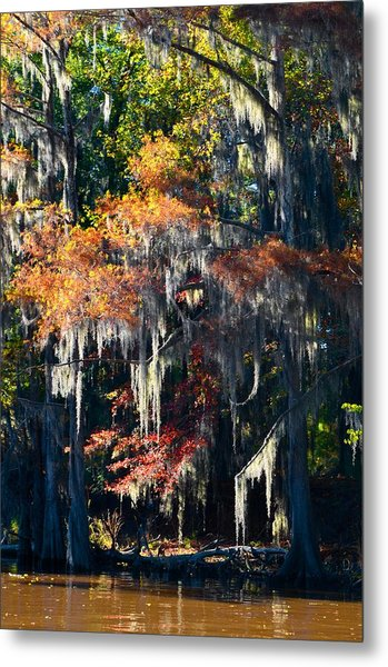 Caddo Lake 40 Metal Print