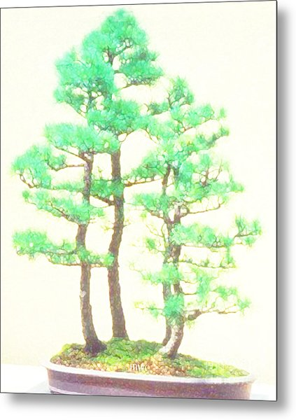 Caitlin Elm Bonsai Tree Metal Print