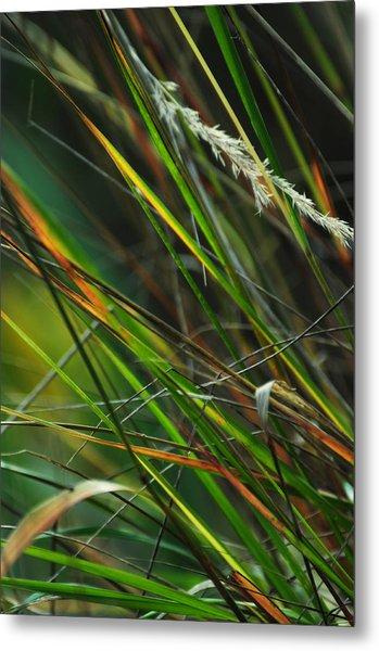 Calamagrostis Lines Metal Print