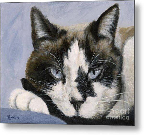 Calico Cat With Attitude Metal Print
