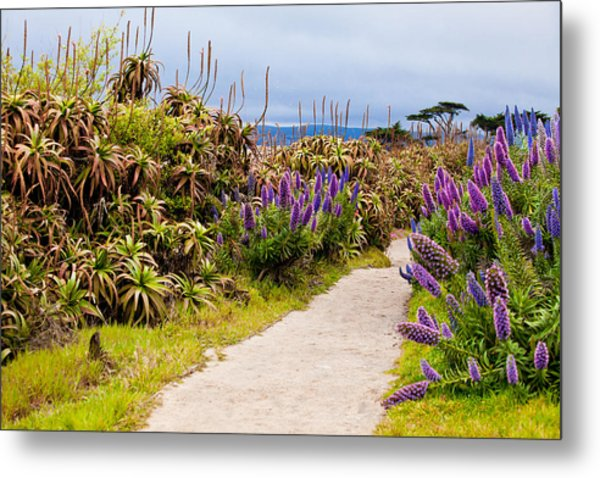 California Coastline Path Metal Print