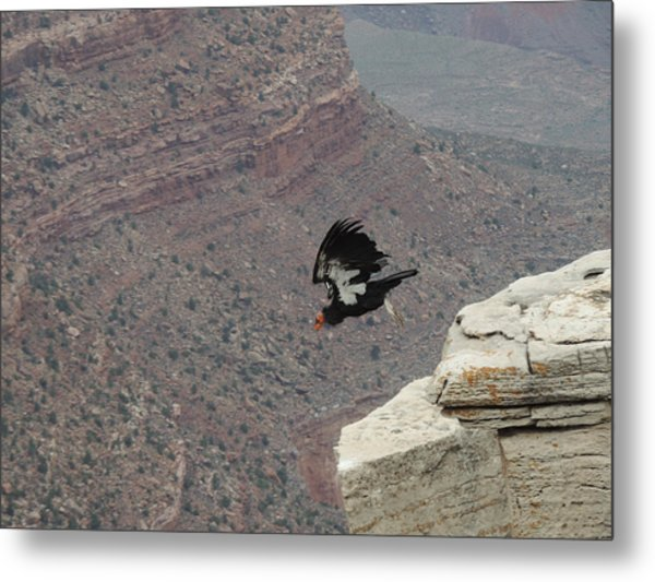 California Condor Taking Flight Metal Print