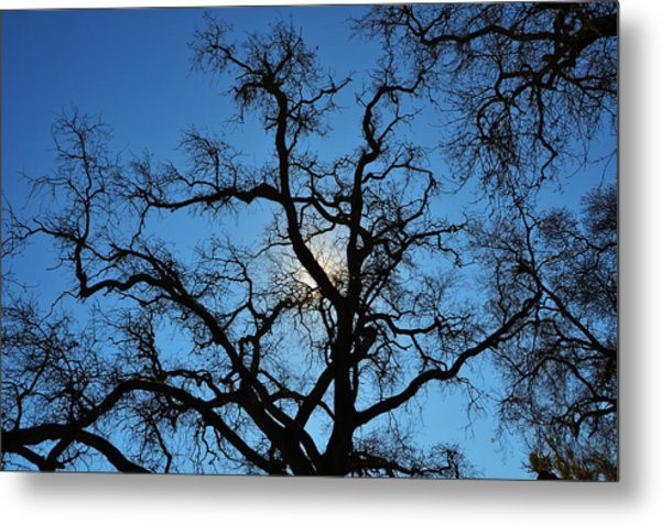 California Oak Sun Tree Metal Print