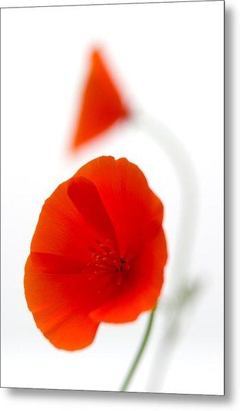 Californian Poppies 2 Metal Print