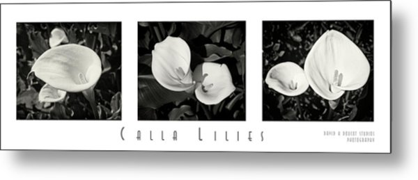 Calla Lilies Horizontal With Title And Nameplate Metal Print
