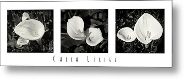 Calla Lilies Horizontal With Title Metal Print