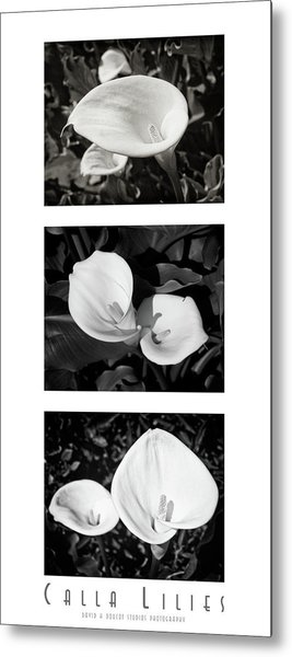 Calla Lilies Vertical With Title And Nameplate Metal Print