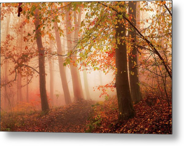 Calm Walk In Colors. Metal Print