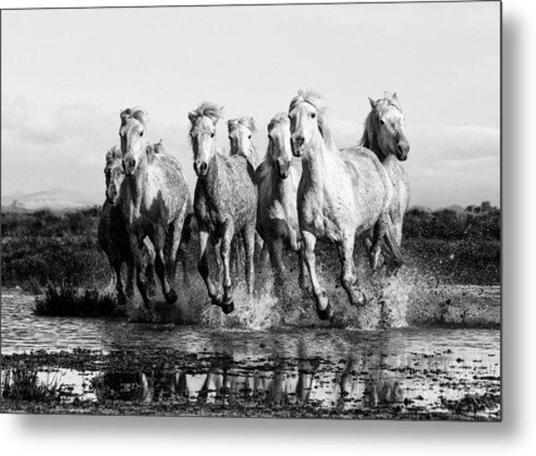 Camargue Horses At The Gallop Bw Metal Print