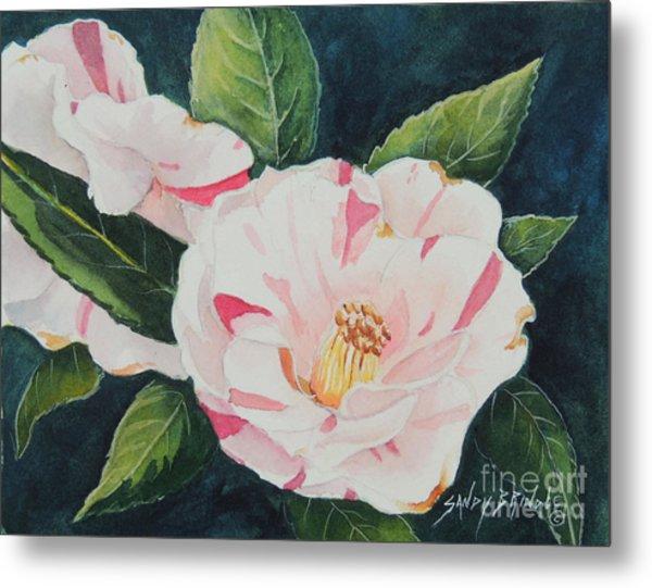 Camellia ...sold  Metal Print