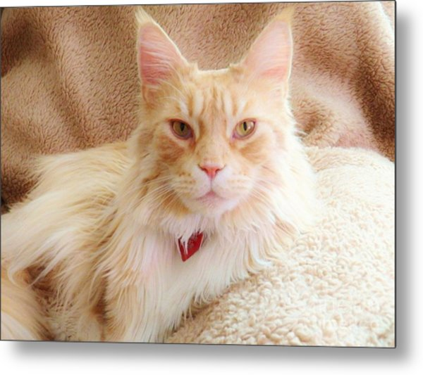 Cameo In Camoflage Metal Print by Judy Via-Wolff