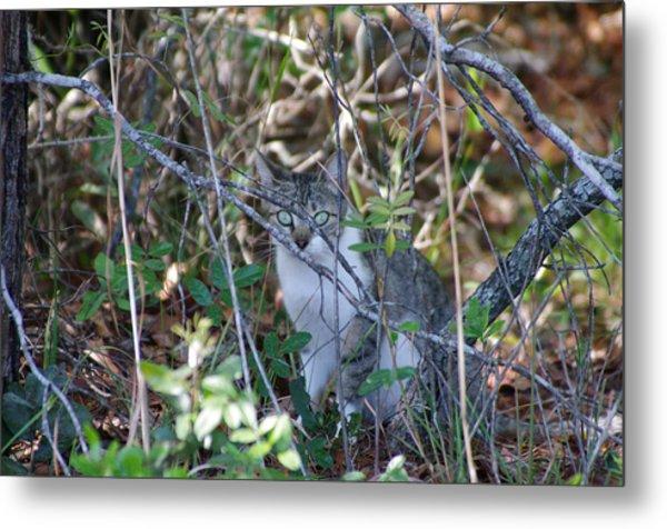 Camouflage Cat Metal Print