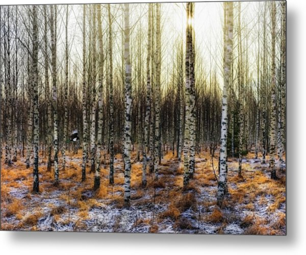 Camouflages Metal Print