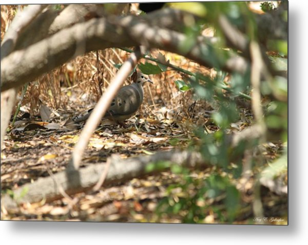 Can You See Me? Metal Print