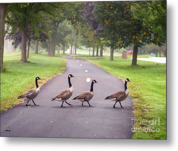 Canada Geese Four In A Row Metal Print