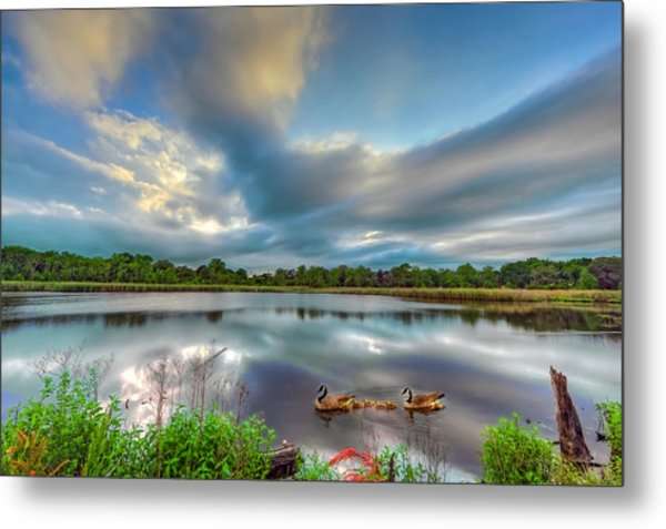 Canadian Geese On A Marylamd Pond Metal Print