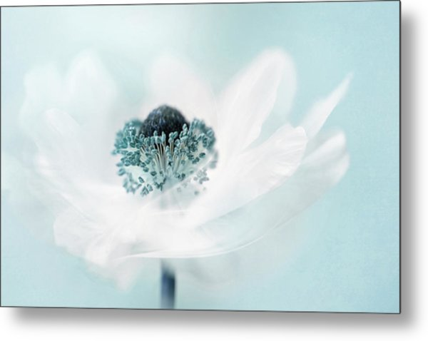 Candy Floss Metal Print by Jacky Parker