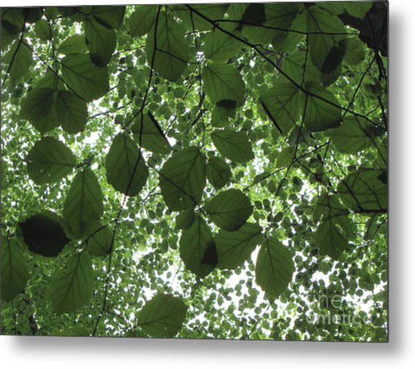 Canopy In Green 3 Metal Print