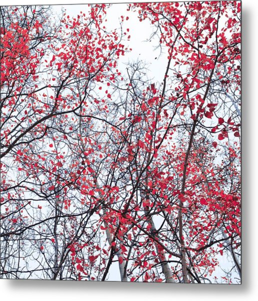Canopy Trees Metal Print