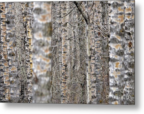 Can't See The Wood For The Trees Metal Print