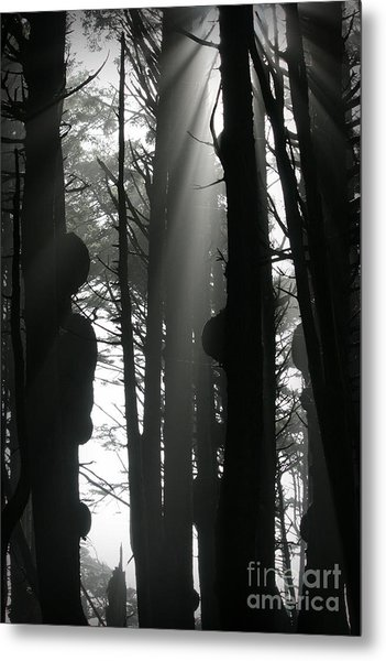 Can't See...the Forest For The Trees Metal Print