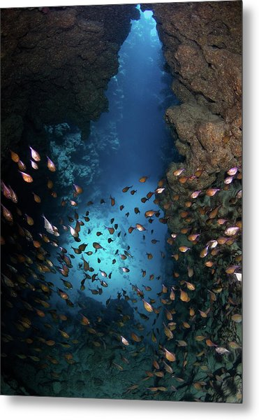 Canyon Metal Print by Nature, Underwater And Art Photos. Www.narchuk.com