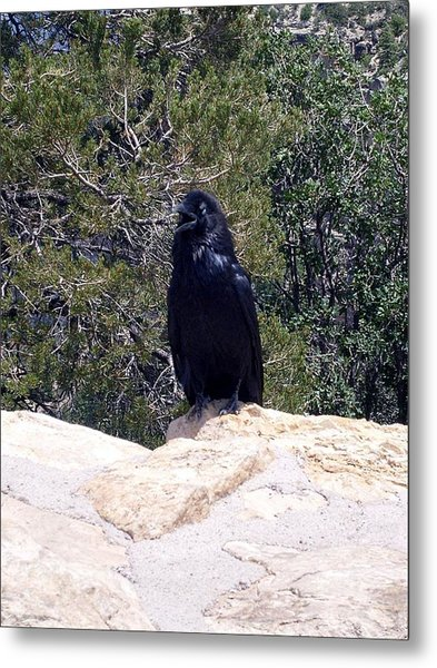 Canyon Raven Metal Print